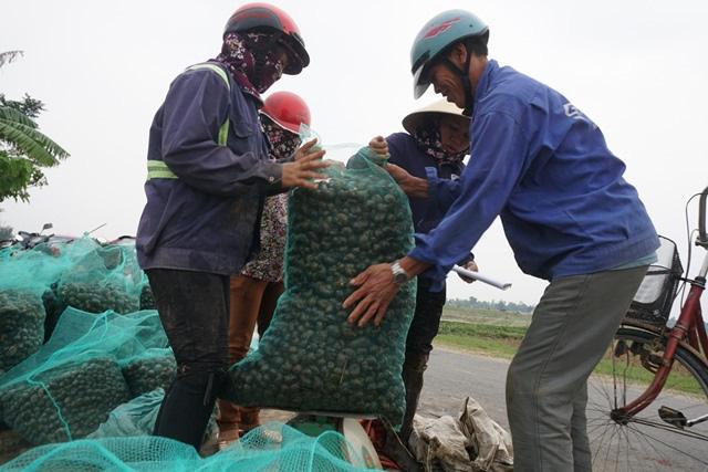 Hà Tĩnh: Thương lái thu mua hàng chục tấn ốc bươu vàng - Ảnh 3.