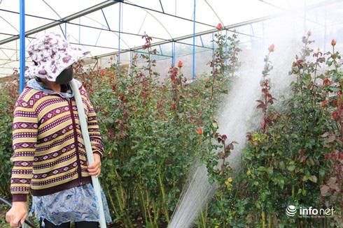 Đà Lạt - Thủ phủ hoa lớn nhất nước bung hàng chuẩn bị đón Tết - Ảnh 3.