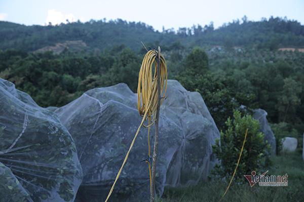 Đồi cam 6 tỷ kỳ lạ nhất Việt Nam, 2.000 cây mắc màn trắng cả rừng - Ảnh 9.