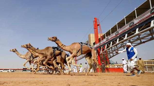Khám phá bệnh viện 10 triệu USD cho lạc đà ở Dubai - Ảnh 1.