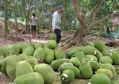 Trung Quốc siết nhập khẩu, hàng loạt nông sản Việt lại rớt giá mạnh - Ảnh 1.
