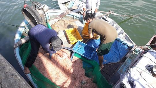 Ngư dân Bình Định kiếm tiền triệu sau vài giờ ra khơi nhờ trúng ruốc biển - Ảnh 1.