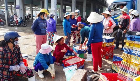 Ngư dân Bình Định kiếm tiền triệu sau vài giờ ra khơi nhờ trúng ruốc biển - Ảnh 2.