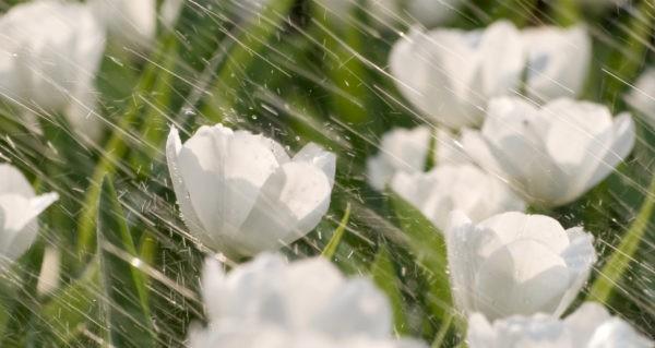 Y học cổ truyền Ấn Độ hướng dẫn thay đổi lối sống khi mùa đông sang xuân, làm theo ngay để luôn sống khỏe - Ảnh 3.