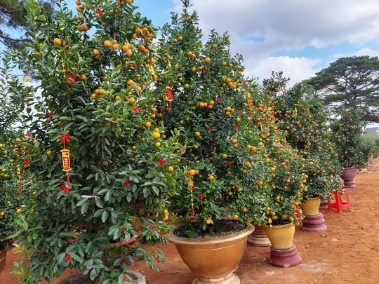 Nông sản rớt giá, các nhà vườn giảm giá bán chạy hoa kiểng - Ảnh 3.