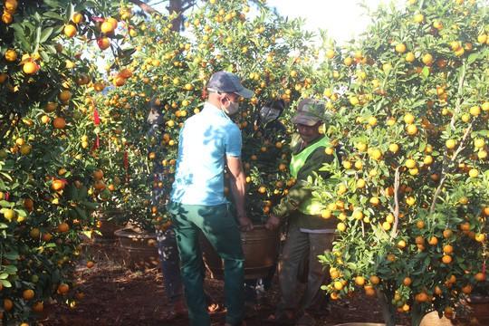 Nông sản rớt giá, các nhà vườn giảm giá bán chạy hoa kiểng - Ảnh 4.