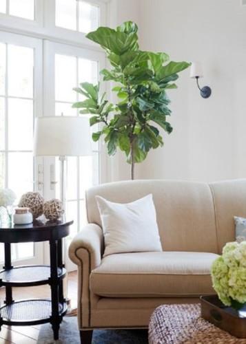 Bí kíp chọn sofa bền đẹp cho phòng khách - Ảnh 5.