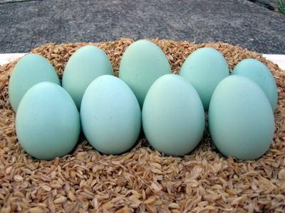 Trứng gà Nhật Bản có gì thần thánh mà lại có loại lên đến 100k/quả? - Ảnh 4.