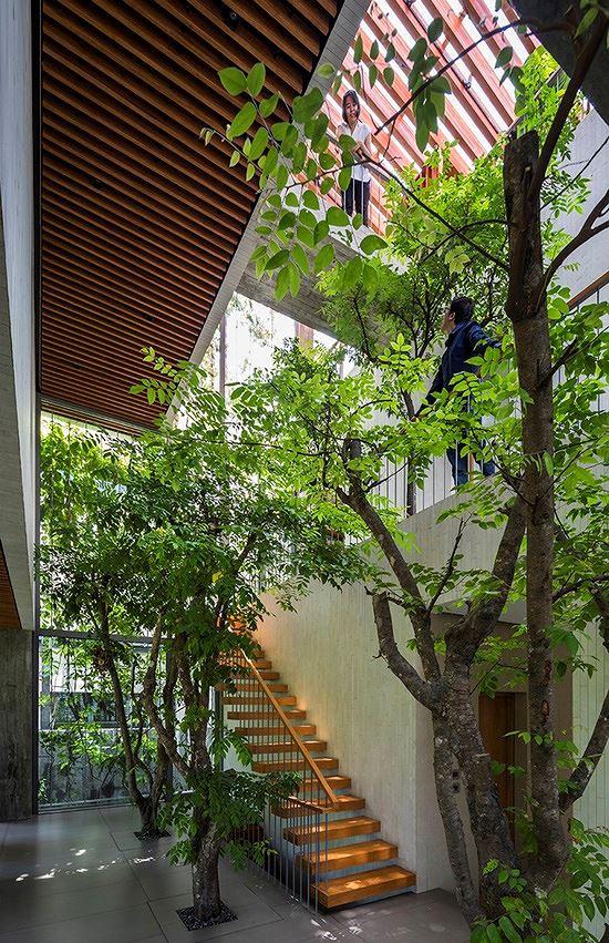 Hô biến cả rừng cây xanh vào trong nhà phố - Ảnh 5.