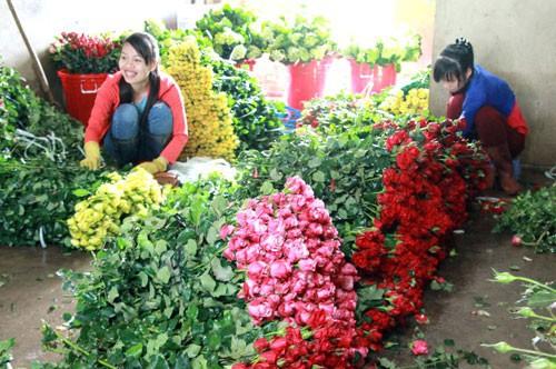Hoa hồng Đà Lạt khan hàng, sốt giá  - Ảnh 1.