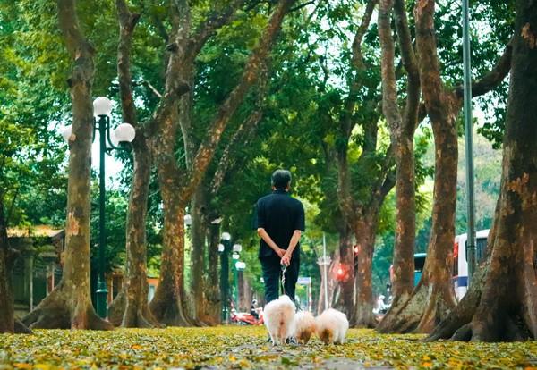Đẹp ngỡ ngàng mùa sấu thay lá đổ vàng rực cả con đường lãng mạn nhất Hà Nội - Ảnh 2.