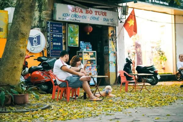Đẹp ngỡ ngàng mùa sấu thay lá đổ vàng rực cả con đường lãng mạn nhất Hà Nội - Ảnh 4.