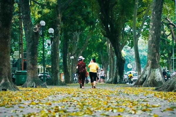 Đẹp ngỡ ngàng mùa sấu thay lá đổ vàng rực cả con đường lãng mạn nhất Hà Nội - Ảnh 8.