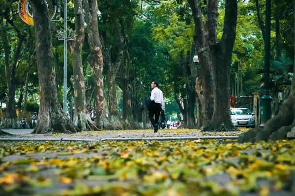 Đẹp ngỡ ngàng mùa sấu thay lá đổ vàng rực cả con đường lãng mạn nhất Hà Nội - Ảnh 10.