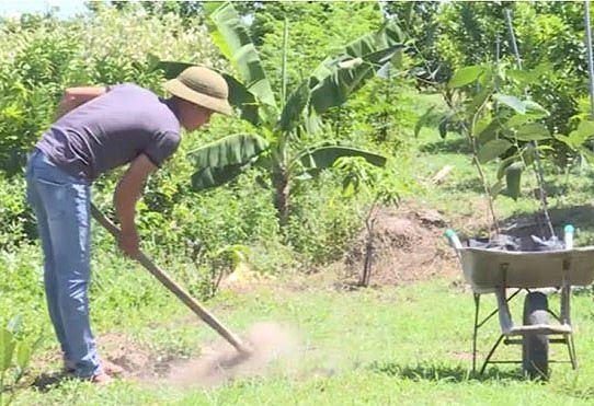 Người dân Bình Phước đổ xô trồng mít Thái vì lãi khủng - Ảnh 1.