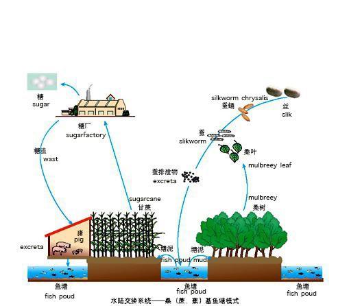Trung Quốc đang nuôi hơn 1,4 tỷ dân của mình như thế nào? (Phần 1) - Ảnh 9.