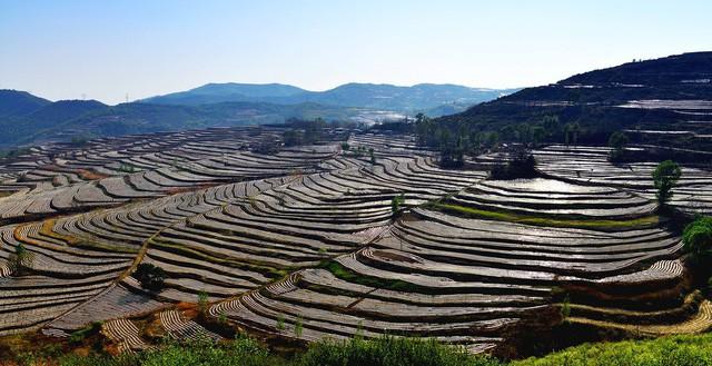 Người Trung Quốc đang nuôi gần 1,4 tỷ dân của mình như thế nào? (Phần 3) - Ảnh 5.