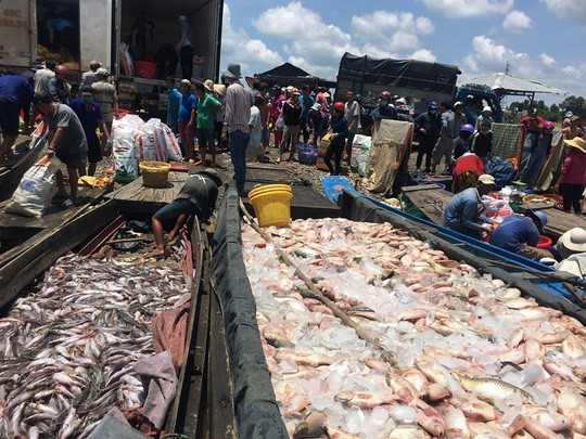 Đồng Nai: Hàng trăm tấn cá phơi bụng trên sông  - Ảnh 1.