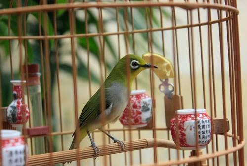 Cô gái 9x kiếm cả trăm triệu hàng tháng nhờ làm bỉm cho chim, xuất khẩu đi cả Mỹ, Canada, Ả Rập - Ảnh 1.