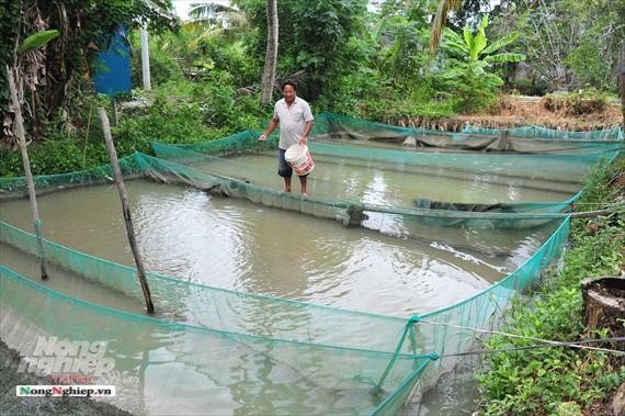 ĐBSCL: Lũ về, cá giống nước ngọt tăng giá mạnh - Ảnh 1.