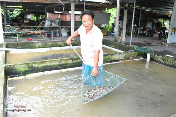 ĐBSCL: Lũ về, cá giống nước ngọt tăng giá mạnh - Ảnh 2.