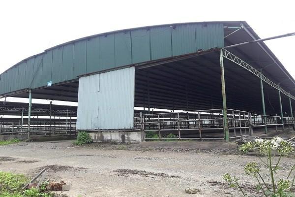Trại bò nghìn tỷ liên quan ông Trần Bắc Hà giờ thành vườn chuối - Ảnh 8.