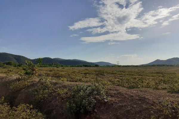 Trại bò nghìn tỷ liên quan ông Trần Bắc Hà giờ thành vườn chuối - Ảnh 10.