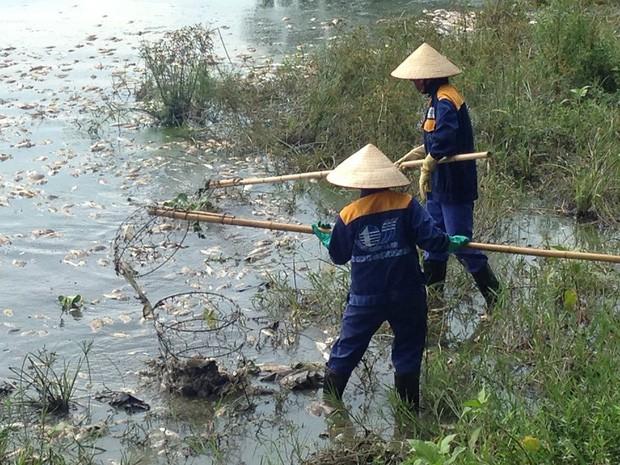 Nguyên nhân cá chết hàng loạt nổi trắng hồ Yên Sở ở Hà Nội - Ảnh 2.