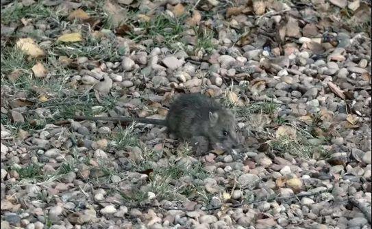 Góc khuất sau Las Vegas hào nhoáng: Cuộc sống chui rúc của cư dân chuột chũi trong đường hầm bẩn thỉu, nhặt thức ăn thừa từ thùng rác - Ảnh 13.