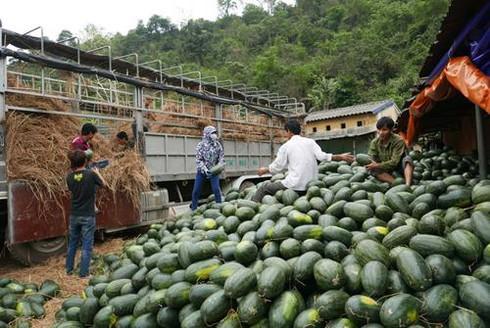 Vì sao xuất khẩu của Việt Nam sang Trung Quốc ngày càng giảm? - Ảnh 1.