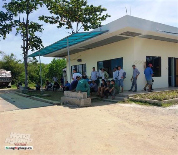 Thừa Thiên - Huế: Xe giăng kín cổng nhà máy chờ nhập sắn - Ảnh 3.