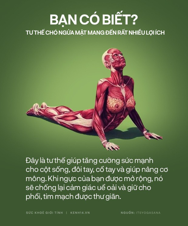 Bạn có biết: 10 tư thế yoga đơn giản sau đây đều có tác dụng rất tốt cho sức khoẻ và tinh thần - Ảnh 3.