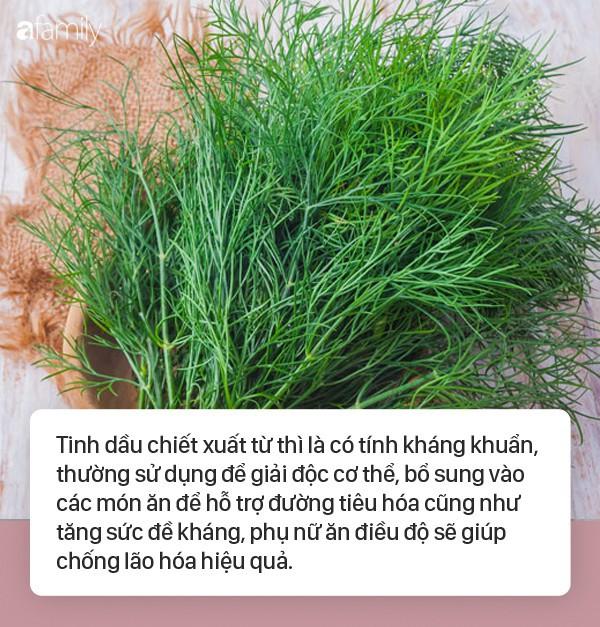 Không chỉ khử mùi tanh cực tốt, loại rau gia vị cực dễ trồng trong vườn này sau là thần dược chữa bệnh vào mùa se lạnh - Ảnh 1.