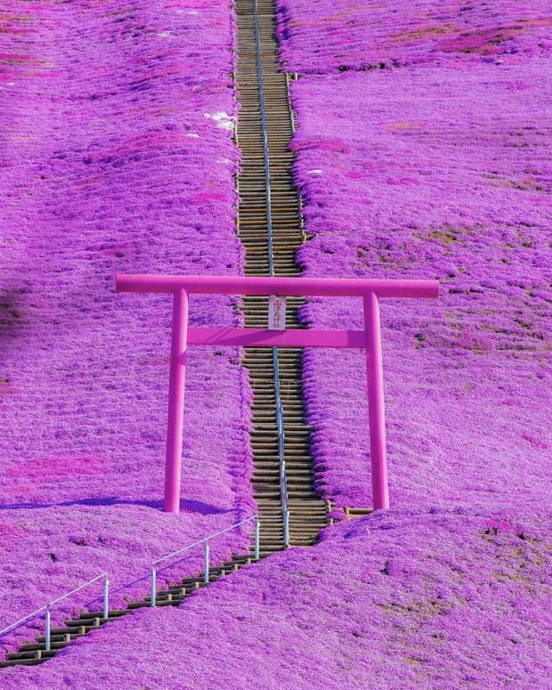 Loạt cổng Torii huyền thoại dọc khắp xứ Phù Tang, có nơi nối dài đến hơn... 10.000 cái - Ảnh 13.