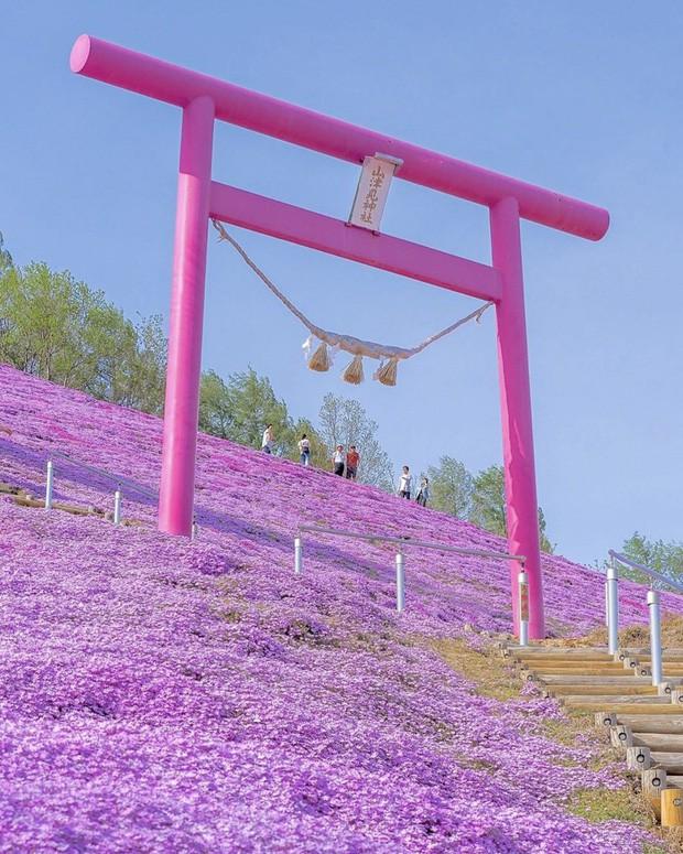 Loạt cổng Torii huyền thoại dọc khắp xứ Phù Tang, có nơi nối dài đến hơn... 10.000 cái - Ảnh 14.
