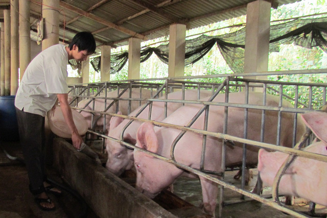 Giá thịt lợn cứ cao quá, người tiêu dùng quay lưng không ăn nữa - Ảnh 2.
