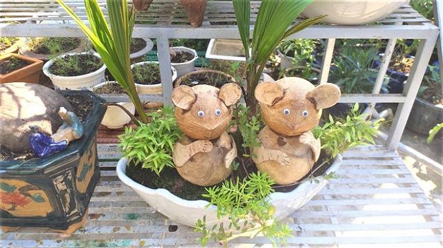 Năm con Chuột chơi cây cảnh Tết với tạo hình chuột - Ảnh 1.