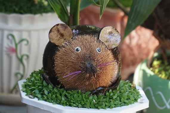 Độc đáo bonsai dừa hình chuột - Ảnh 4.