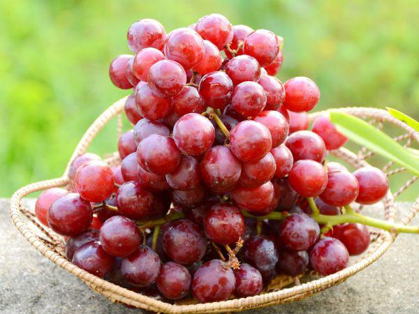 10 loại trái cây siêu tốt cho sức khỏe, chuyên gia khuyên hãy bổ sung thường xuyên trong năm mới - Ảnh 4.