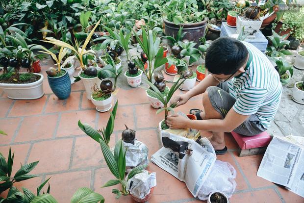 Dừa hình con chuột độc đáo ở Sài Gòn giá gần 1 triệu đồng, khách nườm nượp đặt hàng dịp Tết Canh Tý 2020 - Ảnh 13.