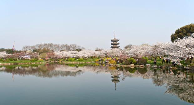 Lo ngại dịch viêm phổi cấp do virus corona, các công ty lữ hành huỷ toàn bộ tour đi Trung Quốc dịp Tết - Ảnh 1.