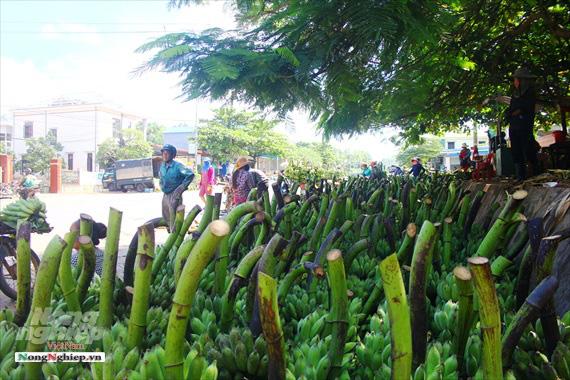 Nông dân vùng cao thu về cả trăm triệu nhờ vụ chuối Tết - Ảnh 10.