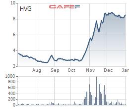 Sau khi cổ phiếu tăng gấp 3, Thuỷ sản Hùng Vương (HVG) sẽ hợp tác chiến lược với THACO phát triển mảng chăn nuôi - Ảnh 2.