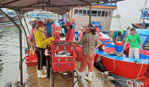 """Tôm cá đầy khoang, ngư dân xứ Quảng bội thu """"lộc biển"""" đầu năm - Ảnh 1."""