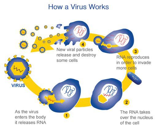 Những sự thật ít người biết về virus: Chúng đến từ đâu, lây lan và gây bệnh như thế nào? - Ảnh 3.