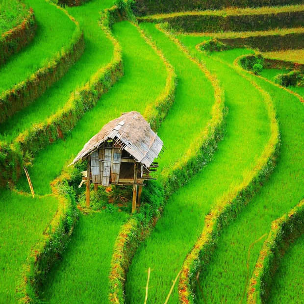 HOT: Ruộng bậc thang Mù Cang Chải vừa được công nhận Di tích Quốc gia đặc biệt, dự sẽ ngày càng hot trên bản đồ du lịch Việt - Ảnh 8.