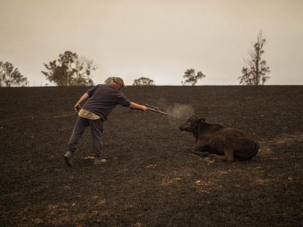 Thương quá tự nhiên ơi: Hình ảnh xót xa cho thấy đại thảm họa cháy rừng tại Úc đang khiến các loài vật bị giày vò kinh khủng đến mức nào - Ảnh 15.