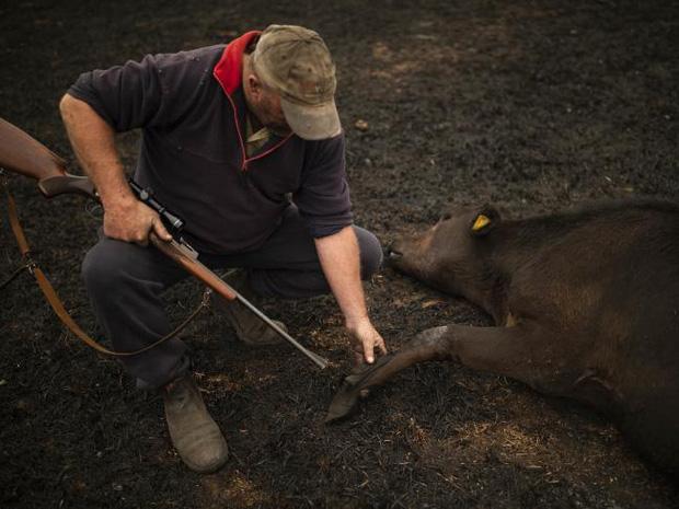 Thương quá tự nhiên ơi: Hình ảnh xót xa cho thấy đại thảm họa cháy rừng tại Úc đang khiến các loài vật bị giày vò kinh khủng đến mức nào - Ảnh 16.