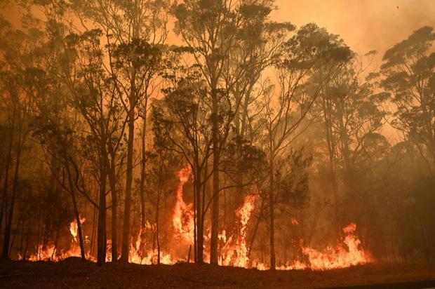 Thương quá tự nhiên ơi: Hình ảnh xót xa cho thấy đại thảm họa cháy rừng tại Úc đang khiến các loài vật bị giày vò kinh khủng đến mức nào - Ảnh 19.