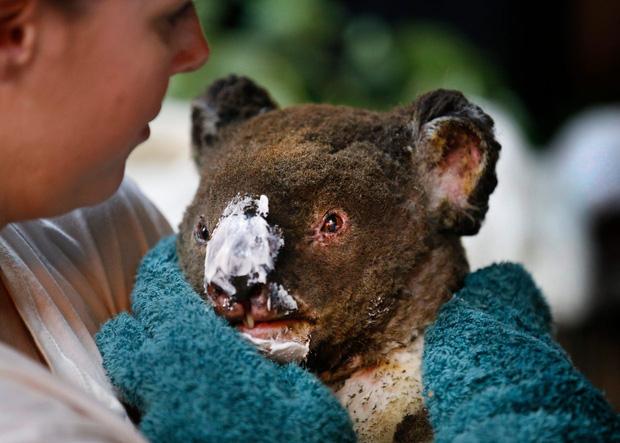 Thương quá tự nhiên ơi: Hình ảnh xót xa cho thấy đại thảm họa cháy rừng tại Úc đang khiến các loài vật bị giày vò kinh khủng đến mức nào - Ảnh 5.
